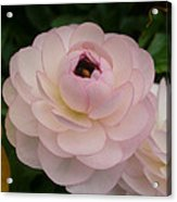 Spring Blooms Of 2013 A  Acrylic Print