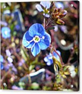 Spring Blooms Of 2013 F Acrylic Print