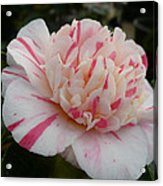 Spring Blooms Of 2013 G Acrylic Print