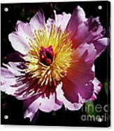 Spring Blossom 12 Acrylic Print