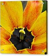 Spring Blossom Sbp Acrylic Print