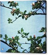 Spring Blossoms 2.0 Acrylic Print