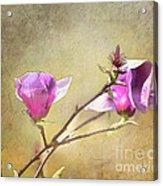 Spring Blossoms - Digital Sketch Acrylic Print