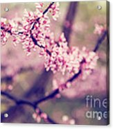 Spring Blossoms II Acrylic Print