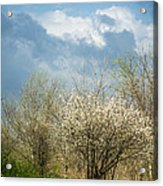 Spring Blossoms Storm Approaching Acrylic Print