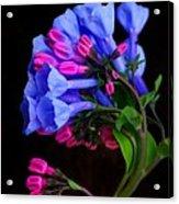 Spring Bluebells Acrylic Print