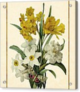 Spring Bouquet Of Daffodils And Narcissus With Butterfly Vertical Acrylic Print