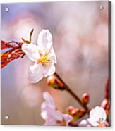 Spring Breeze Acrylic Print
