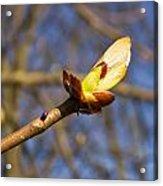 Spring Bud Acrylic Print