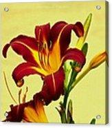 Spring Candor Acrylic Print