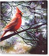 Spring Cardinal Acrylic Print