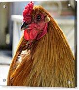 Spring Chicken Acrylic Print