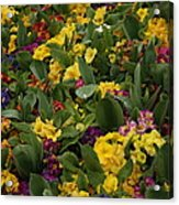 Spring Colour II Acrylic Print by Maeve O Connell