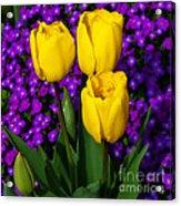 Spring Colours Acrylic Print