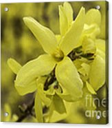 Spring Comes Sofly Acrylic Print