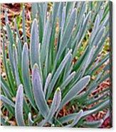 Spring Daffodil Plant Acrylic Print