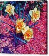 Spring Daffodils On Red - Horizontal Acrylic Print