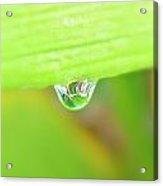 Spring Dewdrop Acrylic Print