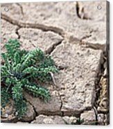 Breaking Of The Drought Acrylic Print