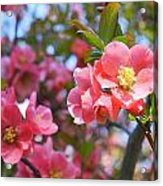 Spring Everywhere Acrylic Print