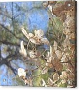 Spring Fancies 4 Acrylic Print