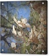 Spring Fancies 5 Acrylic Print