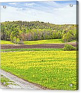 Spring Farm Landscape With Dirt Road And Dandelions Maine Acrylic Print