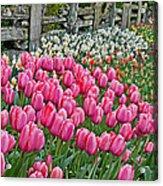 Spring Fence Landscape Art Prints Acrylic Print