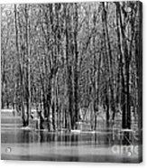 Spring Flooding Acrylic Print