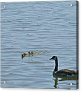 Spring Flotilla With Guardians Acrylic Print