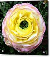 Spring Flower 3 Acrylic Print