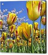 Spring Flowers 12 Acrylic Print