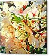 Spring Flowers 27 Acrylic Print