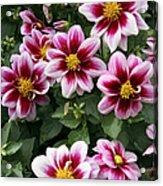 Spring Flowers 4 Acrylic Print