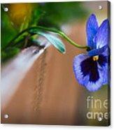 Spring Flowers I Acrylic Print
