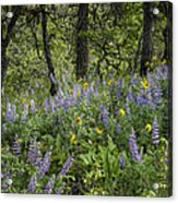 Spring Flowers In The Columbia Gorge Acrylic Print
