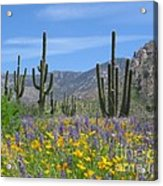 Spring Flowers In The Desert Acrylic Print