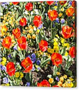Spring Flowers No. 2 Acrylic Print