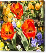 Spring Flowers No. 3 Acrylic Print