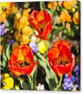 Spring Flowers No. 4 Acrylic Print