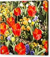Spring Flowers No. 5 Acrylic Print