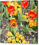 Spring Flowers No. 6 Acrylic Print