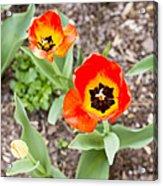 Spring Flowers No. 7 Acrylic Print