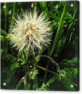 Spring Forest Embellishments 2 Acrylic Print
