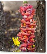 Spring Framed Acrylic Print