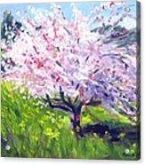 Spring Glory Acrylic Print by Karin  Leonard