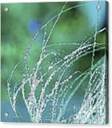 Spring Grass Acrylic Print by Artist and Photographer Laura Wrede
