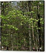 Spring Greenery Acrylic Print