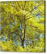 Spring Greening Acrylic Print by Lorraine Heath