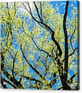 Spring Has Come - Featured 3 Acrylic Print
